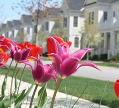 Canton homes with flowers in the foreground
